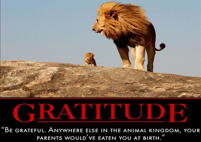 Grateful Lions 3
