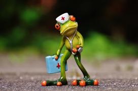 frog doc.jpg